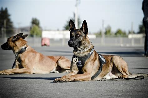 how to a k9 k 9 unit elk grove department