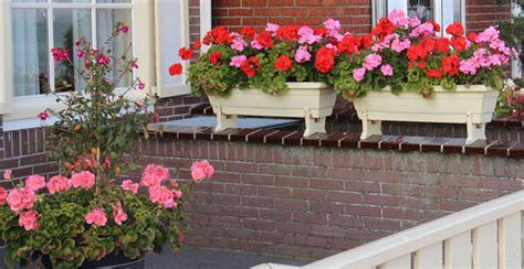fiori antizanzare fiori contro le zanzare arreda il giardino