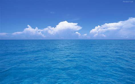 imagenes en movimiento del mar 161 zopilote a la mar radiombligo
