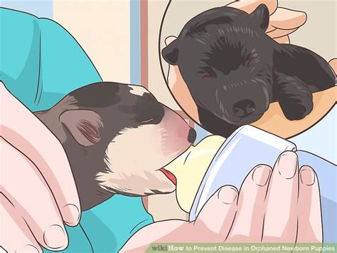 how to feed a newborn puppy that won t eat 3 ways to prevent disease in orphaned newborn puppies wikihow