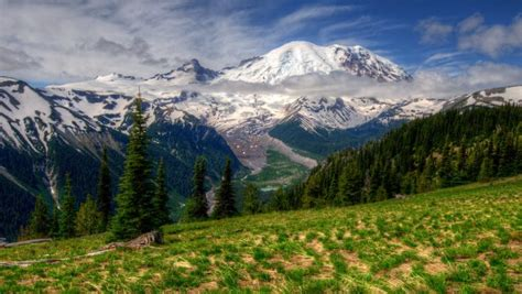 beautiful spring landscape nature flowers mountain snow