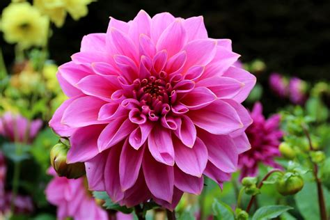 Painting A Small Bathroom Ideas how to store dahlia tubers through the winter