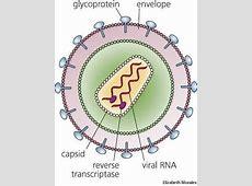 Retrovirus dictionary definition | retrovirus defined Retrovirus