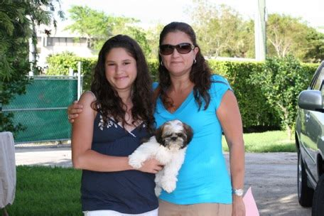 shih tzu breeders in miami florida proud parents 1