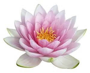 Lotus Flower Free Image Power 2 Zoe Gerlach Licensed Psychotherapist And