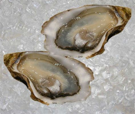 Home Design Box Type by Seafood France Oyster Gillardeau Theodore