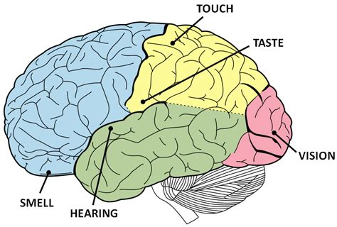 creativity the human brain in the age of innovation books synesthesia how does your name taste the brain bank