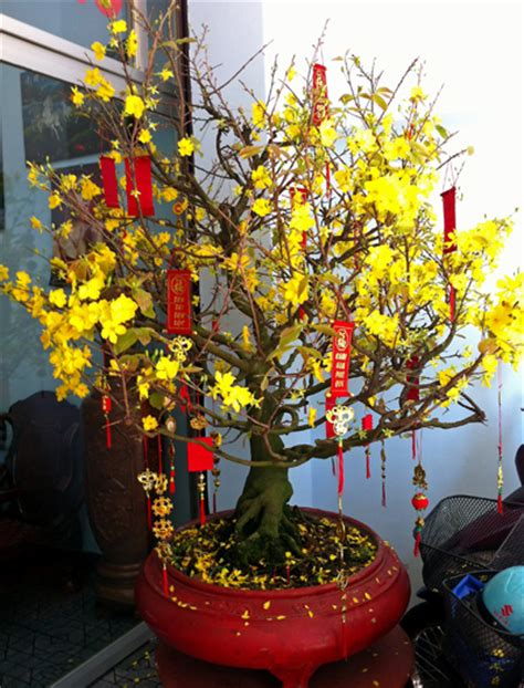 new year blossom tree simon rosie s travel journal