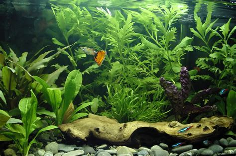 what kind of light for aquarium plants 4 best types of lighting systems for planted aquariums