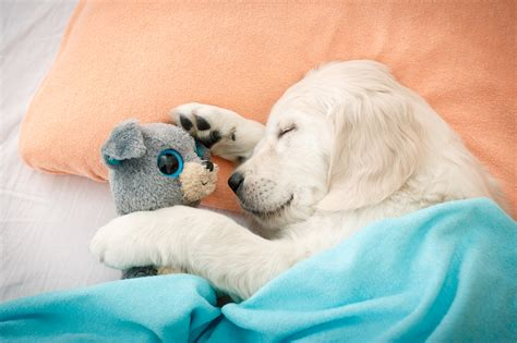 Tierschlaf 187 Kuriose Schlafverhalten Der Tiere Meine