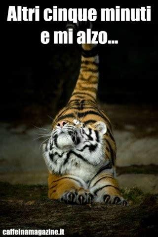 frasi volgari a letto immagini divertenti e foto sugli animali