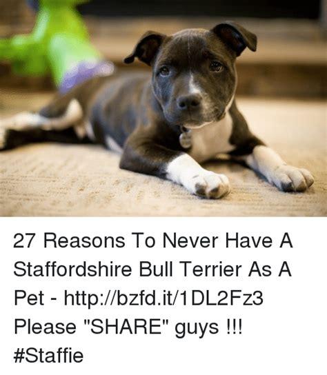 Bulls Memes - 25 best memes about staffordshire bull terrier