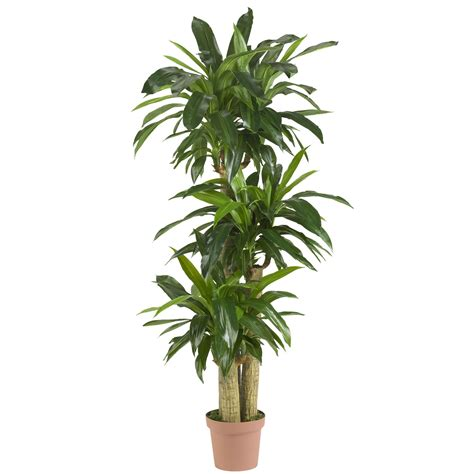 silk plants 57 inch corn stalk dracaena potted 6584