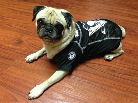 pittsburgh puppies pittsburgh penguins jersey with same day shipping baxterboo