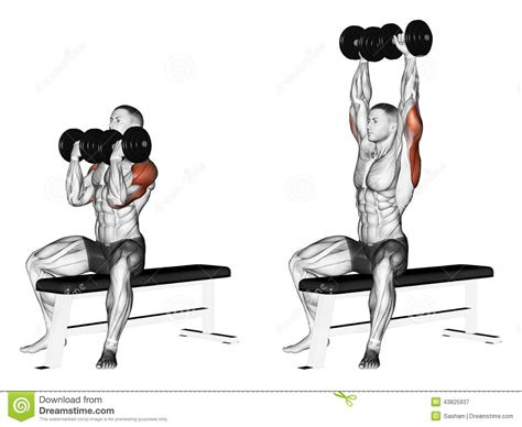 dumbbell alternating bench press exercising alternating dumbbell bench press with stock illustration illustration of