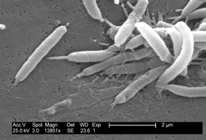 bakterien im stuhl bakterien