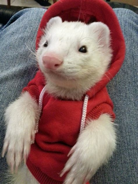 35 cute pictures of pets wearing clothes