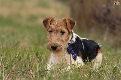 country dogs 7 breeds for country living pets4homes
