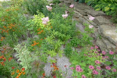 build  rain garden plants  designs