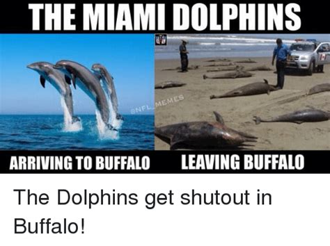 Miami Memes - dolphin meme www pixshark com images galleries with a