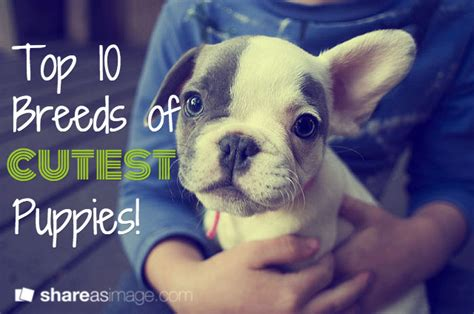 top puppies 10 cutest puppy breeds what dogs cutest pups