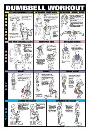 dumbbell workout ii 24 x 36 laminated chart shoulder