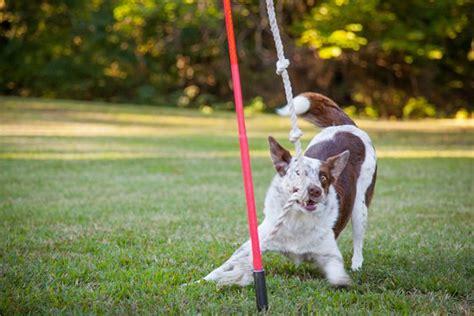 backyard dog toys best outdoor dog toys photos 2017 blue maize