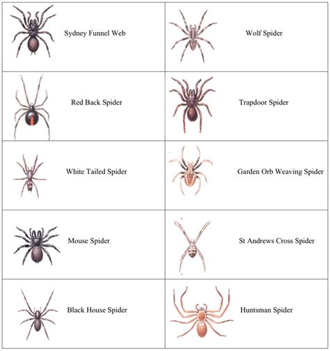 species chart house spider identification chart