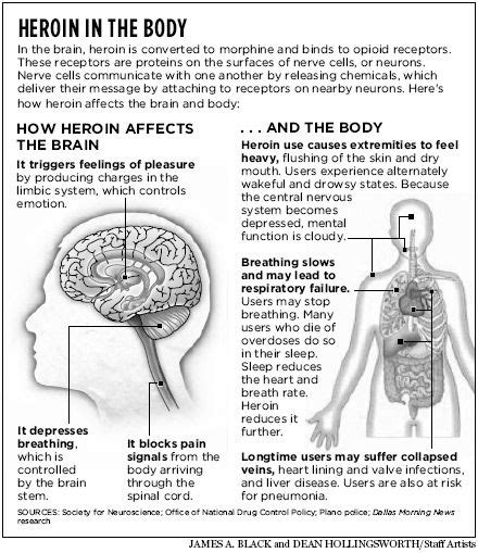 Chemical Detox For Opiates by Biology Of Heroin Withdrawal Mind Spirit