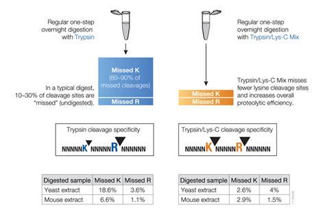 proteinase k promega protein purification and analysis
