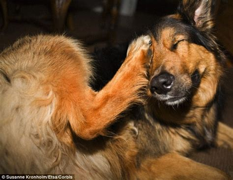 Is Shedding by Human Cells Shed From Skin And Hair Can Cause Dogs And Cats To Sneeze Daily Mail