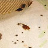 epa bed bugs how to find bed bugs bed bugs get them out and keep them out us epa