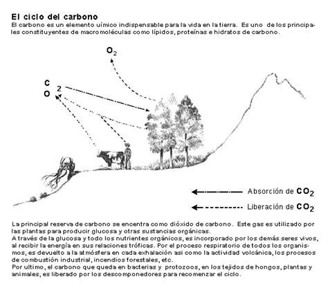 blanco y negro la prefecta fusi 243 n mariluzurrego s blog ciclo del carbono para colorear youtube ilustraci 243 n y