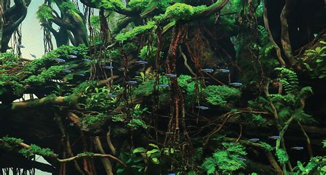 award winning aquascapes aquascape ideas