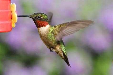 what hummingbirds want mnn mother nature network