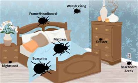 bed bug hiding places home remedies for getting rid of bed bugs