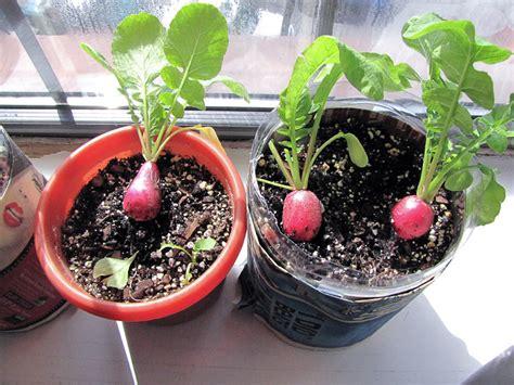 healthy vegetables  herbs  grow indoors