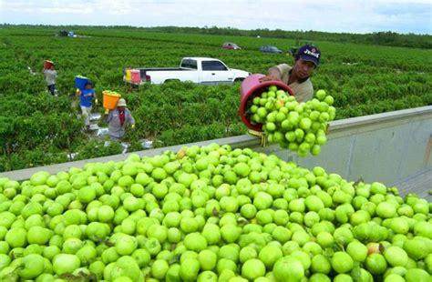 imagenes de trabajadores temporales programa de trabajadores agr 237 colas temporales en canad 225