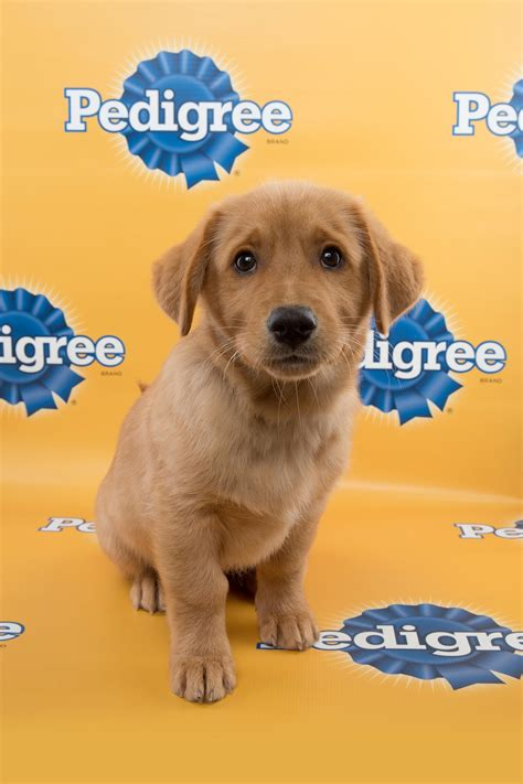 san antonio puppies san antonio strays to be featured in puppy bowl xi blogs san antonio current