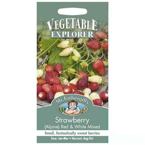 Jual Bibit Stroberi Strawberry Seeds jual benih strawberry white mixed 150 biji mr