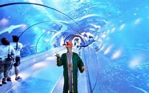 bill gates house aquarium free photos