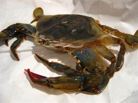 redhead spinach soft shell crab sandwich