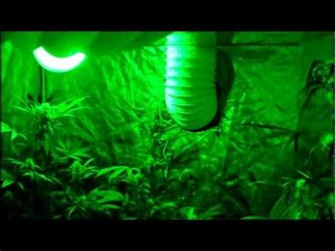 how to grow without lights how to grow indoor without lights organic cfl indoor