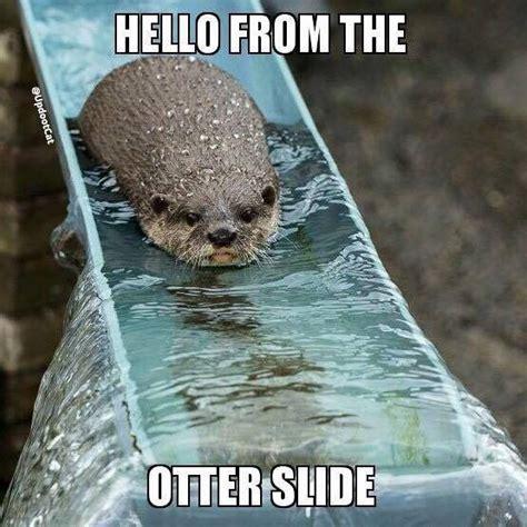 Funny Otter Meme - pi 249 di 25 fantastiche idee su animal puns su pinterest