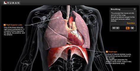 imagenes en 3d del cuerpo humano the biodigital human explora el cuerpo humano en 3d