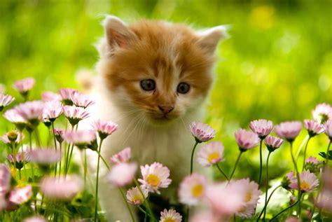 chat on conseils de printemps pour le bien 234 tre de votre chat le