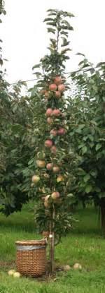 welcher obstbaum für kleinen garten obstb 228 ume f 252 r terrasse und balkon gvb hausinfo