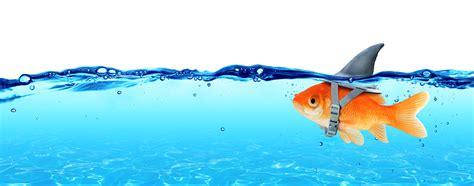 impact  assumptions  leadership edge  change