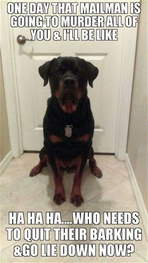 barks at everything 25 best ideas about rottweiler on menes mad meme and