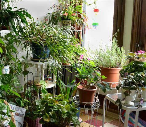 north window plants how to care for christmas cactus in western new york